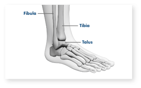 About ankle chart