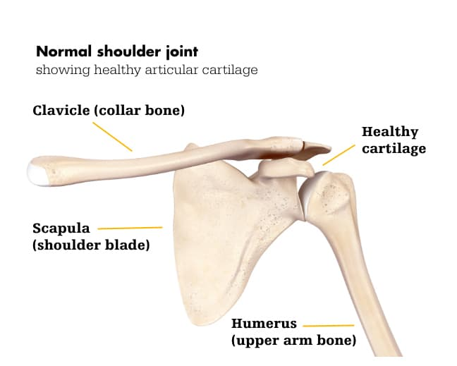 Shoulder normal